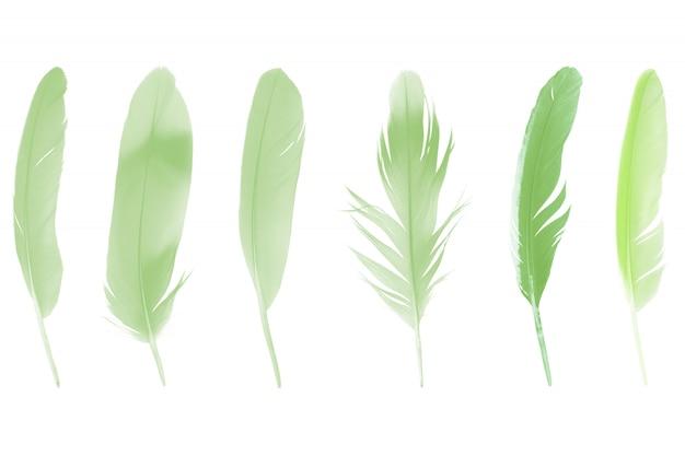 Коллекция зеленых перьев на белом