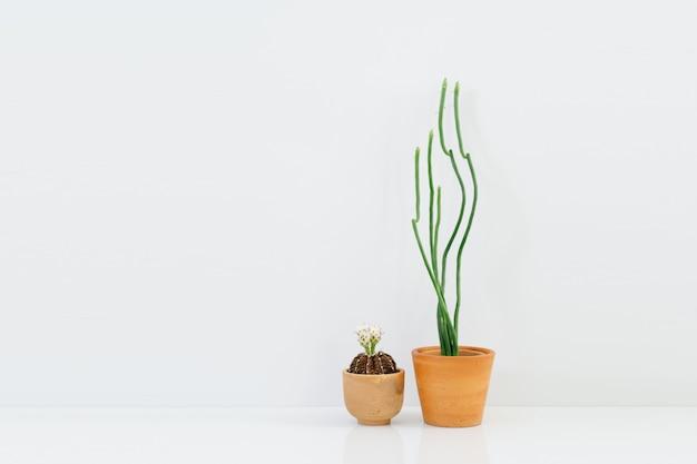 土鍋で最小限のサボテンの植物