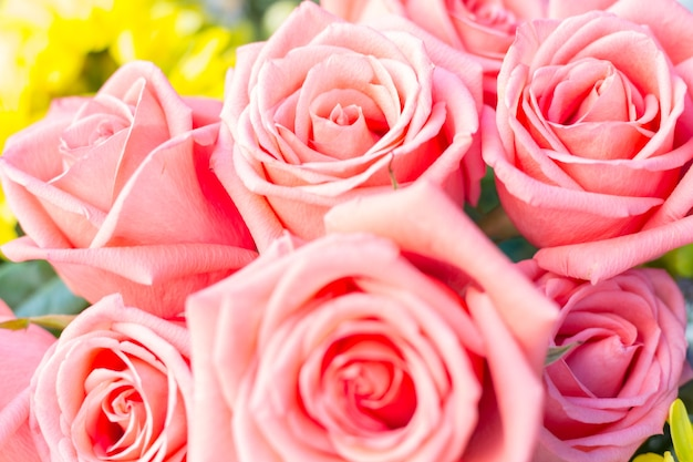 美しい繊細なバラ。ピンクのバラの背景