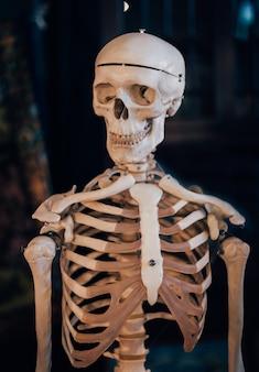 頭蓋骨や骨格はショッキングに見えます。