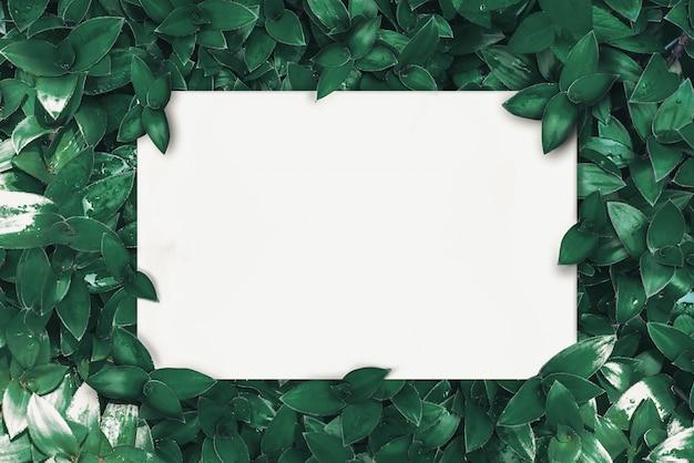 Чистый лист бумаги на зеленых листьях