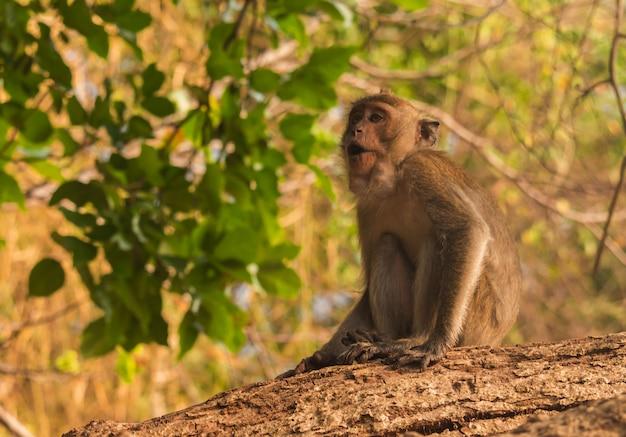 かわいい小猿種は、中央の森林に生息していて、その中に住んでいます