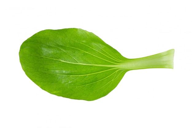 白菜のキャベツ
