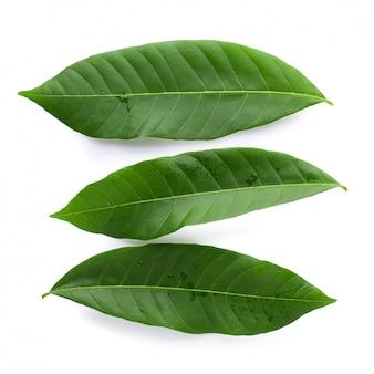 緑の葉の分離