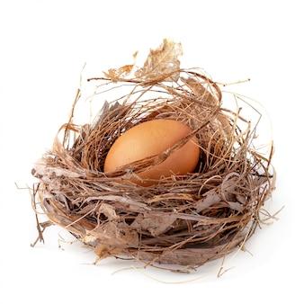 新鮮な卵は分離された自然の巣に座っています