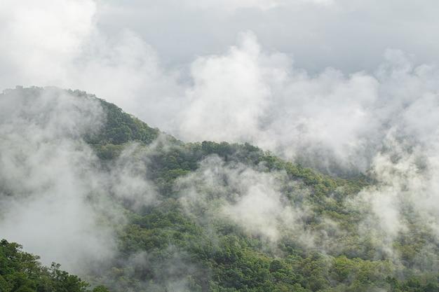 緑の山の風景と山の霧