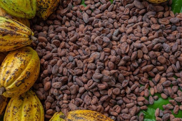 ココア豆と木製のココアフルーツ