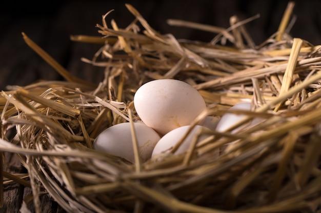 朝の光の中で藁の鶏の卵