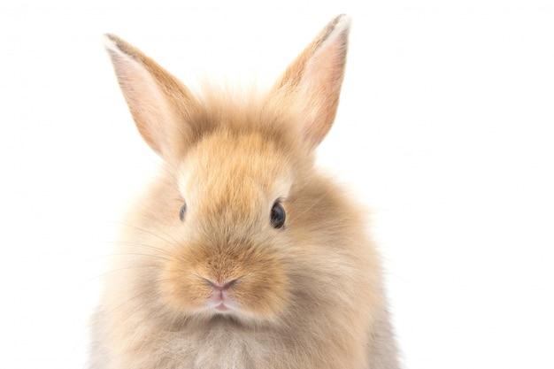 白地に茶色のかわいい赤ちゃんウサギ。
