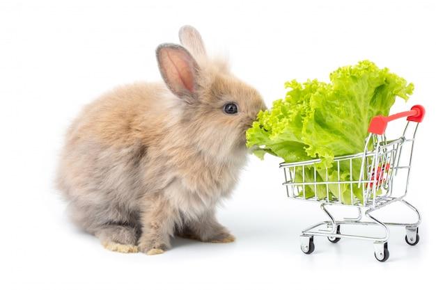 白い背景の上のショッピングカートで有機レタスを食べるかわいい赤ちゃんウサギ