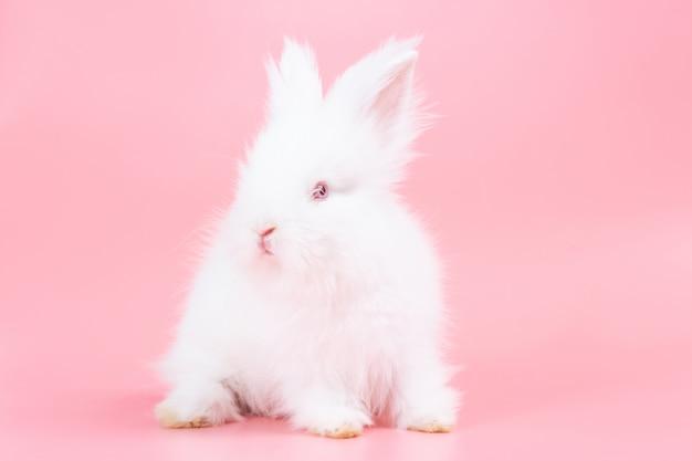 Белый очаровательны кролика на розовом фоне. милый маленький кролик.