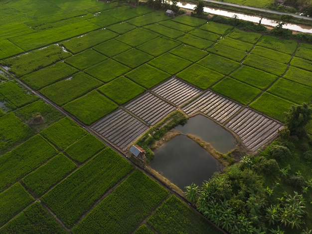 小植物または農園
