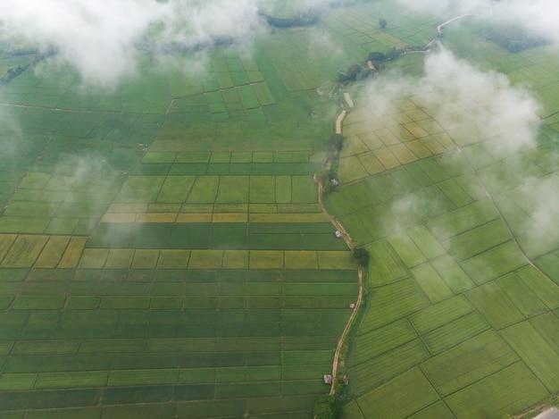 朝の蒸気雲霧または霧