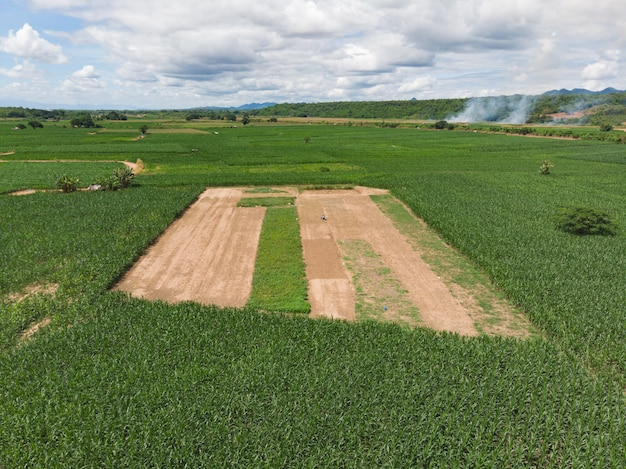 グリーンコーン畑、農園