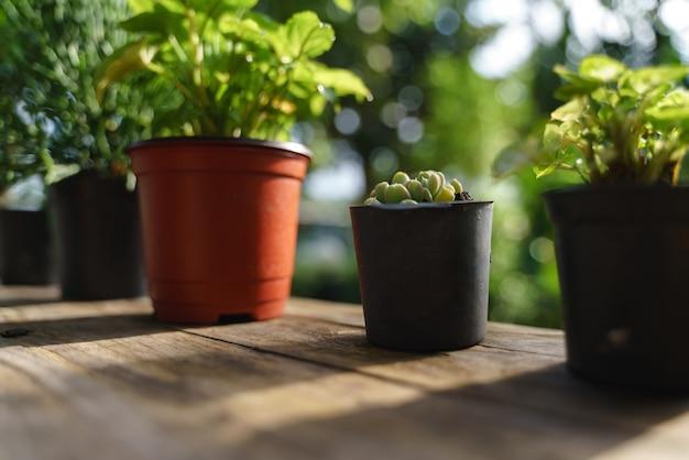 木製の窓で小さな植木鉢