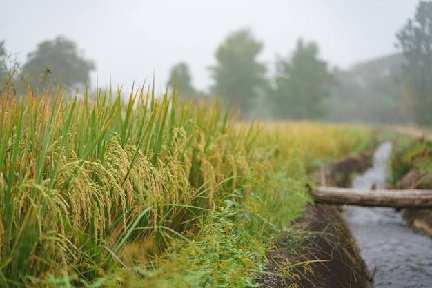 田んぼの横にある運河