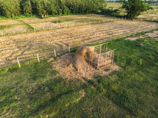 フィールドで牛を供給するための干し草や稲わらの山