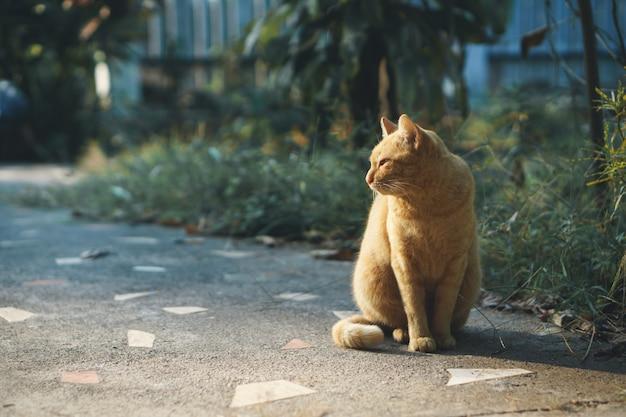 座っているアジアの家の猫