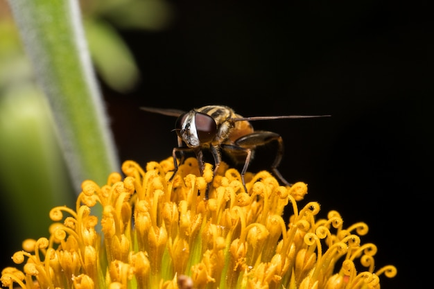 ミツバチ、オレンジ色の花
