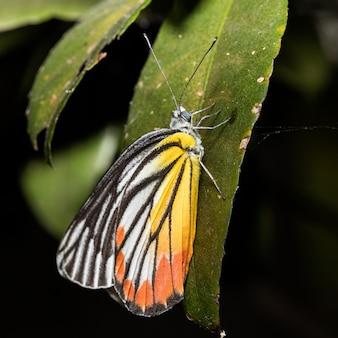 Желтая бабочка на листе