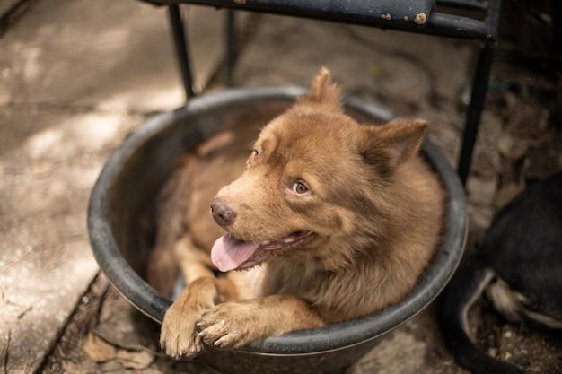 水浴で横になっている茶色の犬