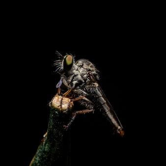 昆虫は黒い枝にいます。