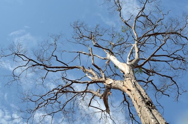 曇った空の古い乾燥した木