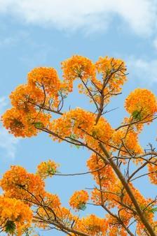 木の上の空の花