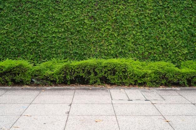 緑の植物の壁