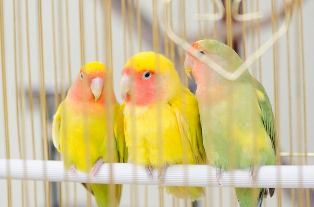 ケージの鳥