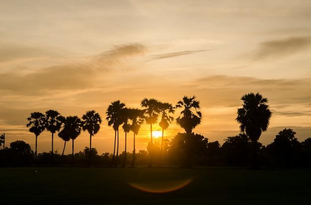 美しい夕日の背景にヤシの木