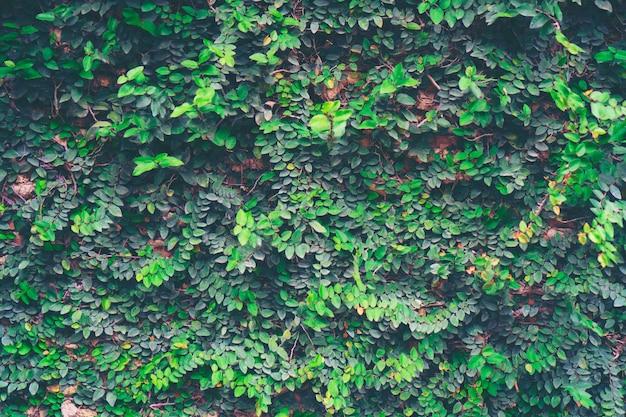 自然の植物の壁、自然の建物のコンセプト
