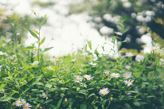Красивая маленькая трава цветы в естественных лугов.