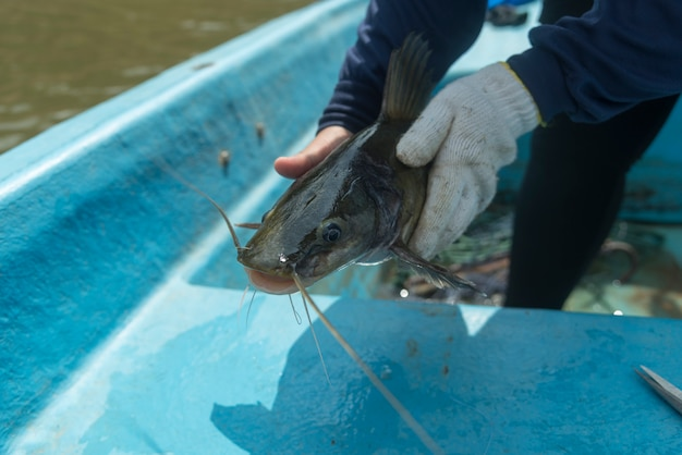 ネットから魚を救助する