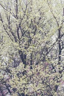 自然の背景に白い花の木