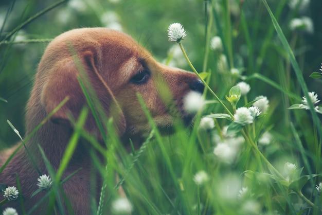 Симпатичные щенки собака работает на лугу.