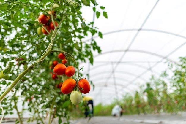 温室で野菜を栽培するための技術