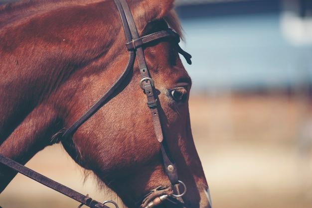 長いたてがみの肖像画と美しい赤い馬