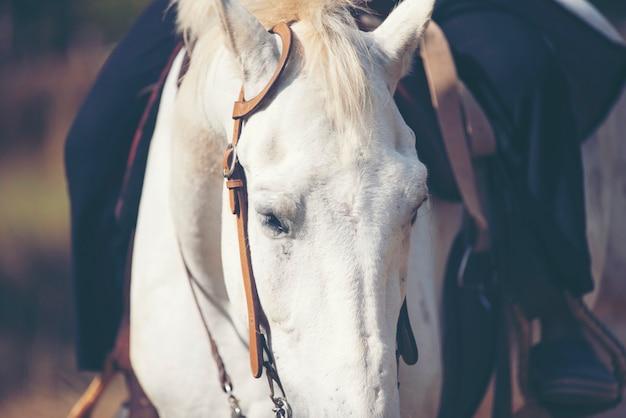 長いたてがみの肖像画と美しい白い馬