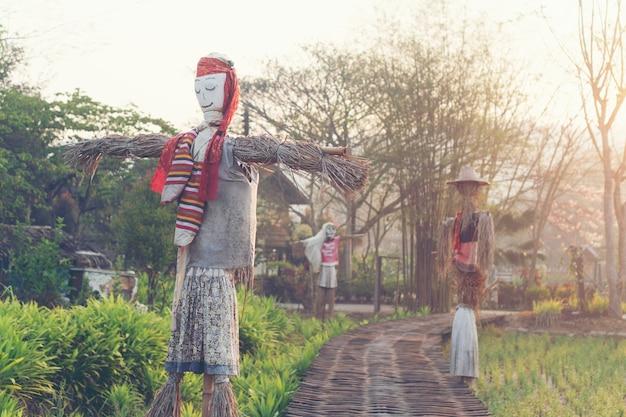 タイの水田