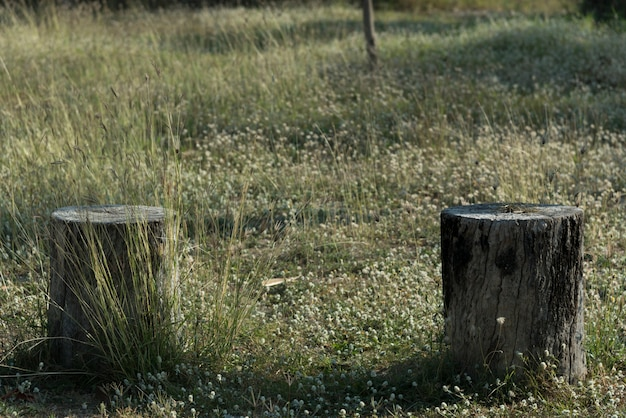 緑の芝生のフィールドに切り株の木の植物