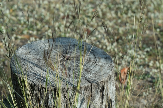 Завод пень на поле зеленой травы