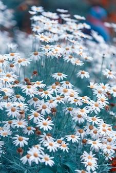 Красивые полевые цветы, винтажный фильтр изображений