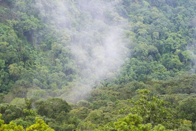 熱帯の緑の森、タイの国立公園の分野