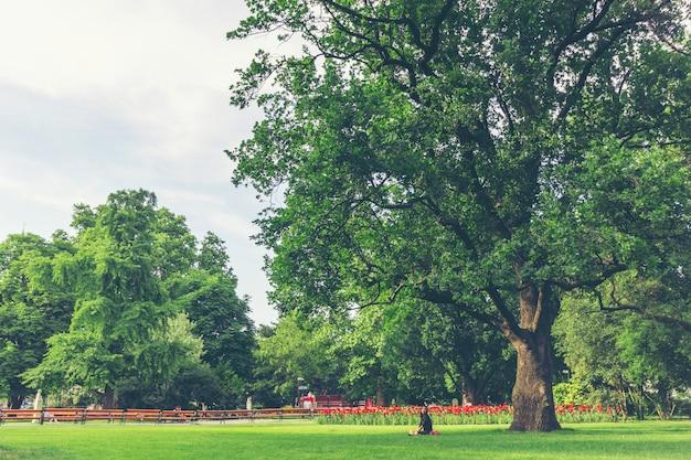 秋の大きな木の枝