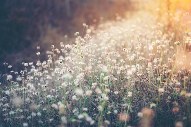 熱帯の花の夕日