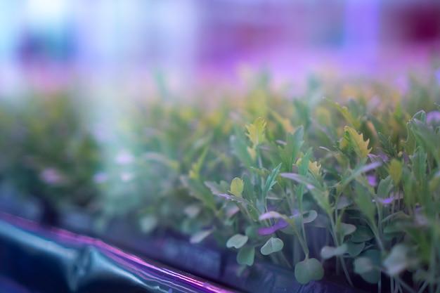 家の中で植物を育てる実験