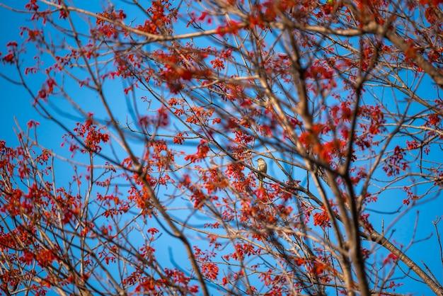 熱帯の野原に赤い花