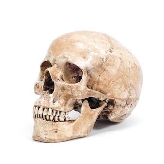 Один человеческий череп на белом фоне