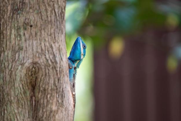 カメレオン、トカゲ、熱帯林のカメレオンの種